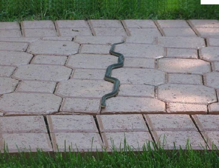 Tao Snake