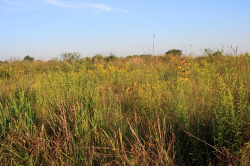 Prairie Grassy