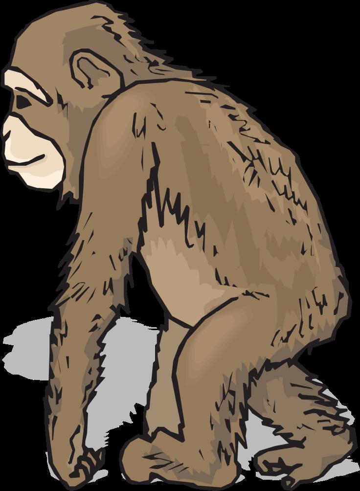 ape-pixabay-cc0-pubdom