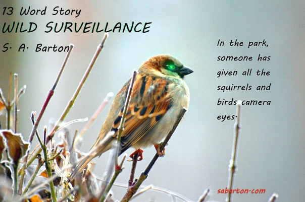 WILD-SURVEILLANCE-sparrow-50346_1920-pixabay-cc0-pubdom