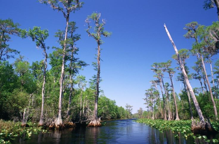 tributary-swamp-699577_1920-pixabay-cc0-pubdom.jpg