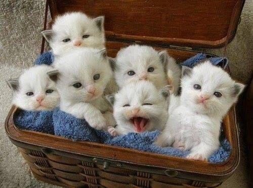 kittenbasket.jpg