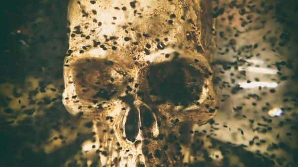 skull-1770376-pixabay-cc0-pubdom.jpg